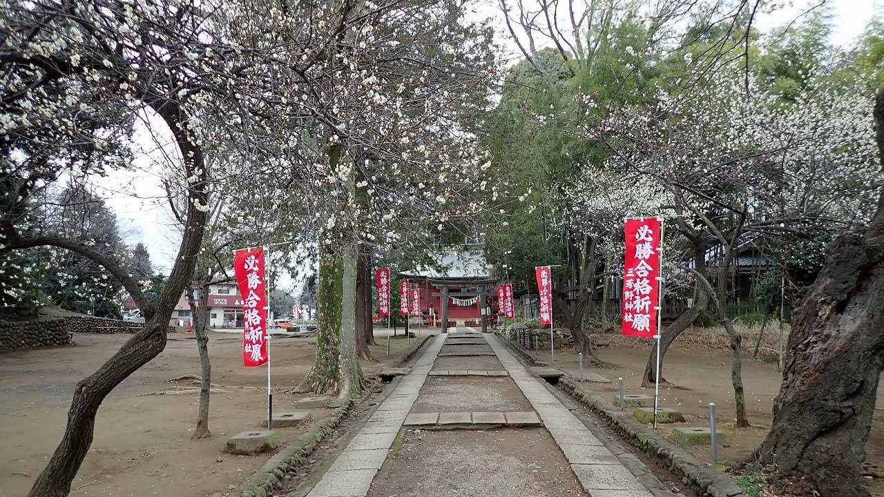 美しい梅を楽しめる川越市の三芳野神社